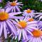 640x480flowers